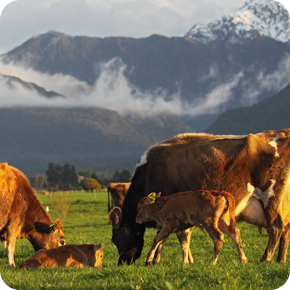 Westland Milk Products - Sustainability Statement - RDAgritech